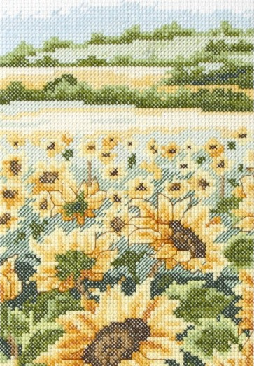 Sunflower Field - AK119
