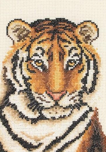 Tiger Portrait - AK123