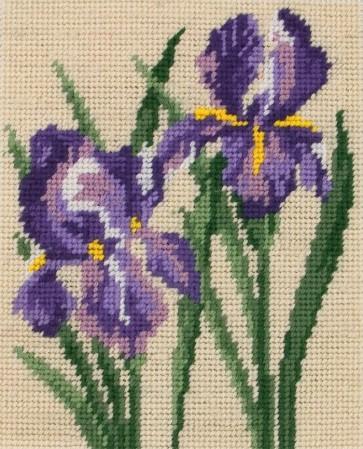 Irises - MR953