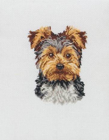 Yorkshire Terrier - PCE217