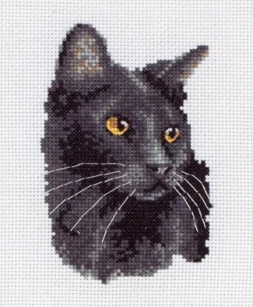 Black Cat - PCE220