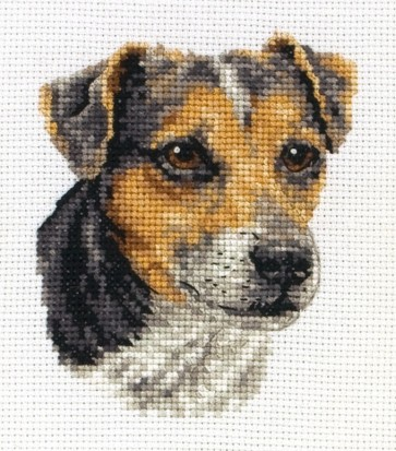 Jack Russell - PCE224