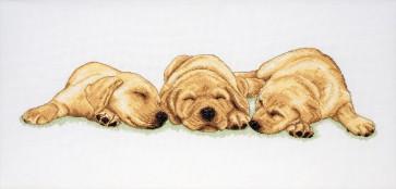 Sleeping Labradors - PCE726