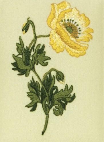 Oriental Poppy - PE121