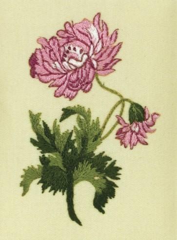 Oriental Chrysanthemum - PE122